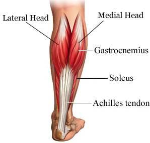 physio-brisbane-cbd-sports-injuries-achilles-tendon-exercises-png